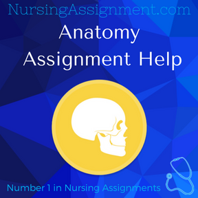 Anatomy Assignment Help