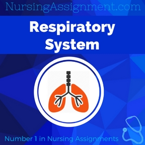 Respiratory System Assignment Help
